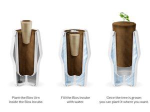 biodegradowalne urny
