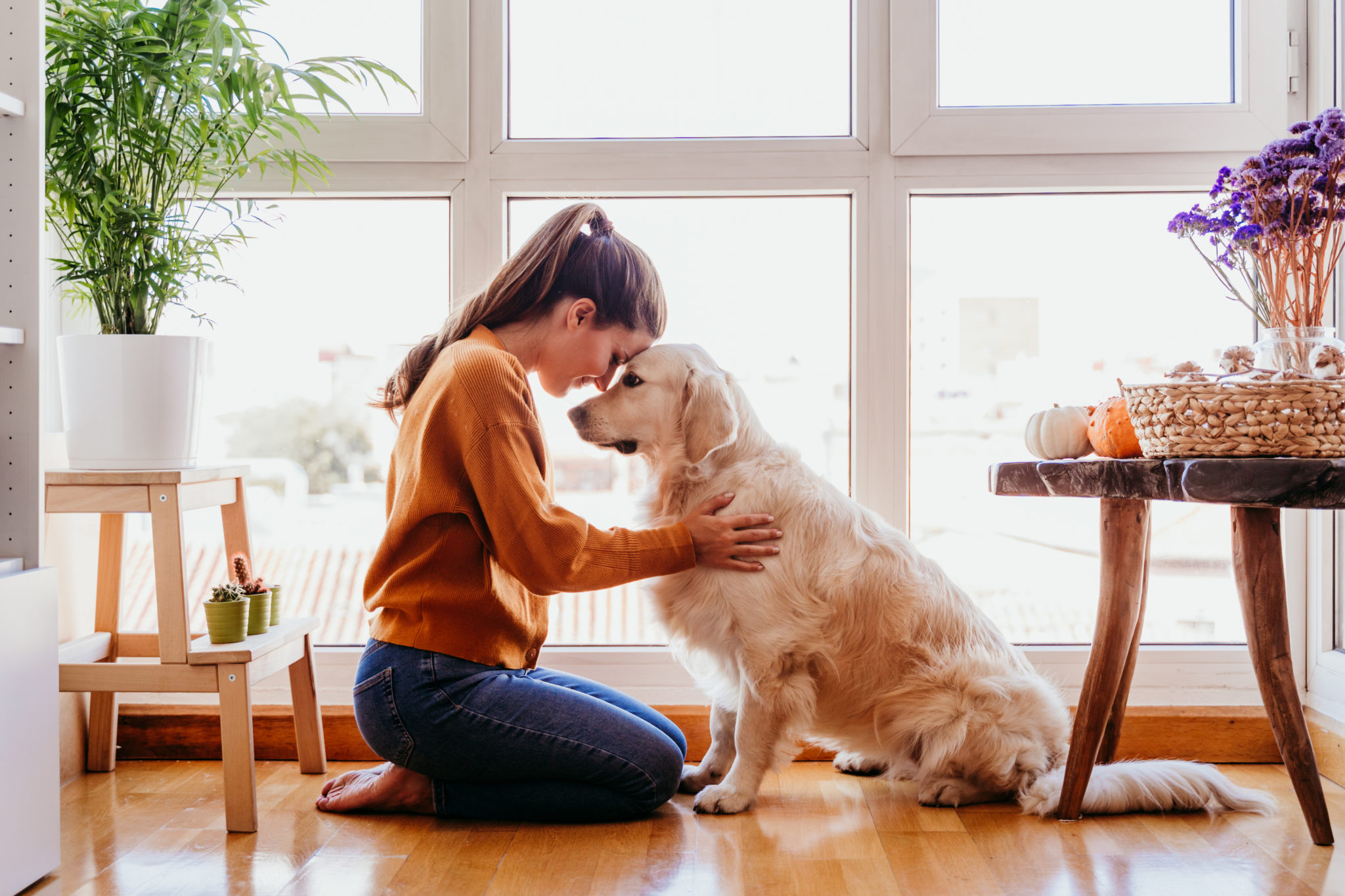 Jak zbudować świadomą relację z psem?