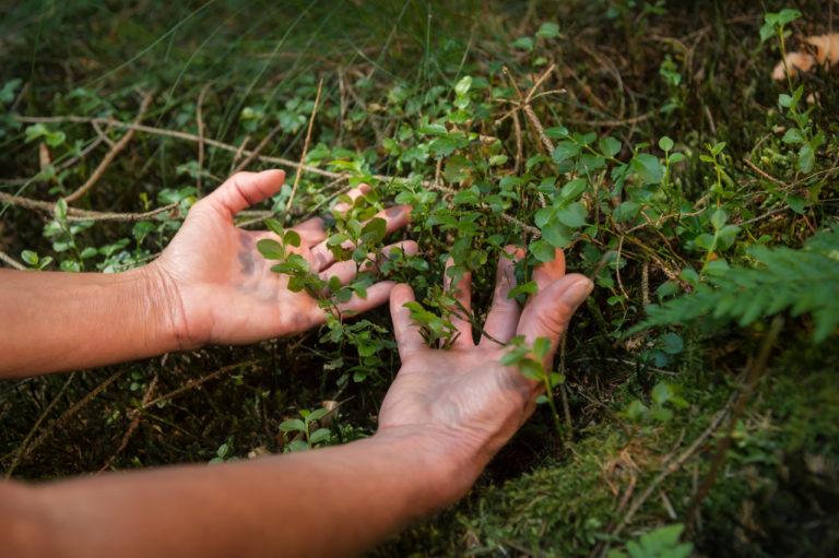 Dlaczego SHINRIN YOKU – japońska sztuka i teoria kąpieli leśnych wspomaga samoczynne procesy zdrowienia oraz co z tym mogą mieć wspólnego konopie?